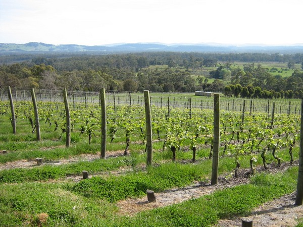 View over vines in early Spring at Grey Sands