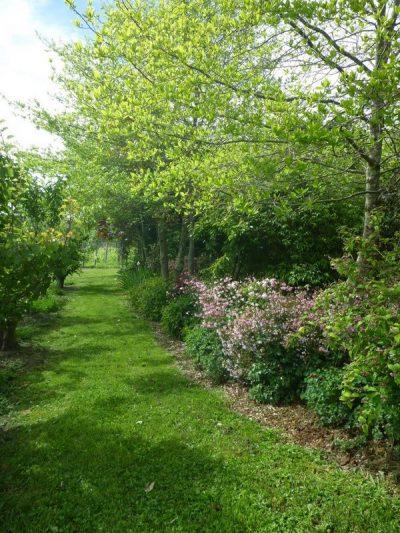 tamar valley wines Grey Sands garden in early summer