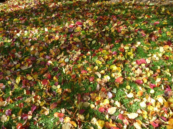 tamar valley wines Fallen coloured leaf 'mosaic'