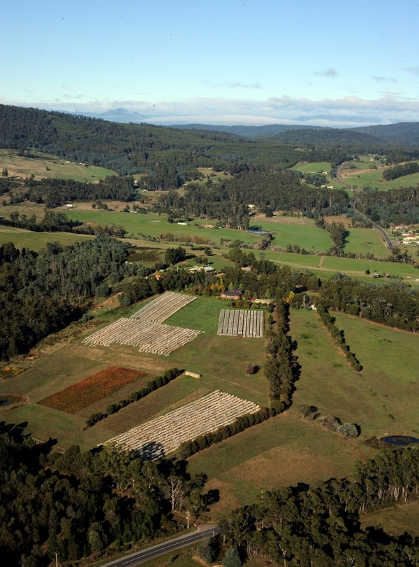 Aerial photo of part of Grey Sands vineyard (merlot beds not visible)
