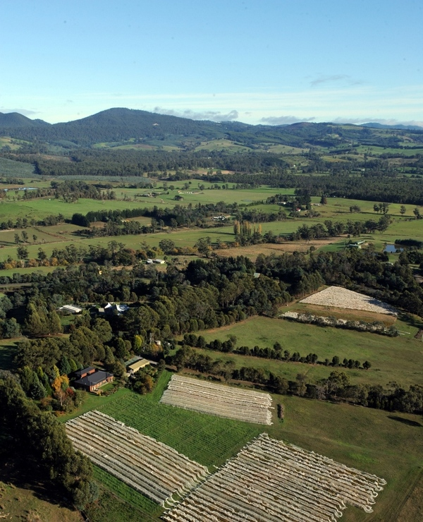 Aerial photo of Grey Sands vineyard (P Noir beds not visible)