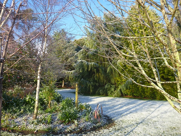 snowy garden 3.8.15