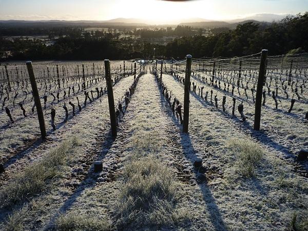snowy vineyard 3.8.15