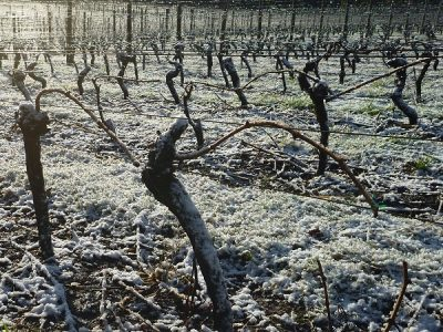 Snow in Grey Sands vineyard 3.8.15