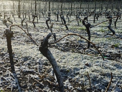 tamar valley wines vineyard snow