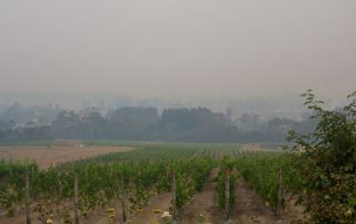 smoke haze over drought affected Grey Sands vineyard