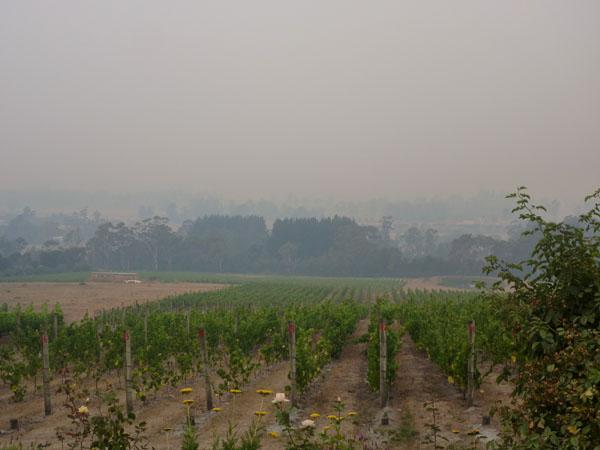 smoke haze over drought affected Grey Sands vineyard