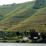 View from DOC restaurant, Douro Valley, Portugal