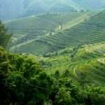 Terraced vines in the Douro valley, Portugal