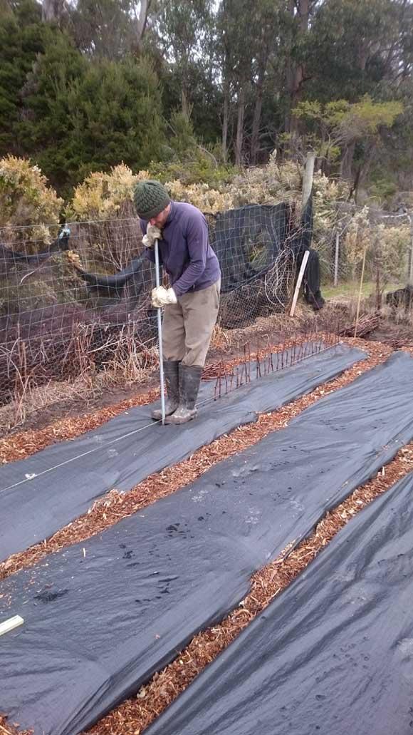 Vittorio starting to plant cuttings