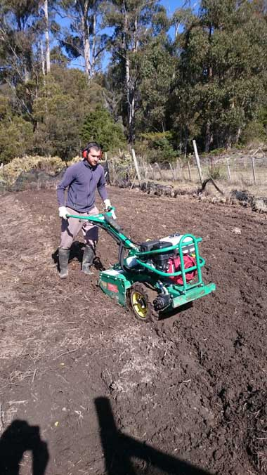 Vittorio rotovating the nursery